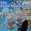 Johannes Boysen