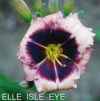 Belle Isle Eye