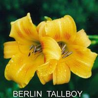 Berlin Tallboy