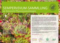 img sempervivum_sammlung