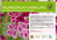 nwps-schild-a2-pelargonium-beeck
