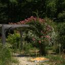 L'arboretum du moulin