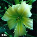 GdS-prämierte Tagliliensorten