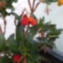 Baumpflanze