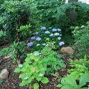 Garten allgemein