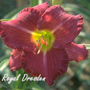 Juhr Taglilien  roy.. bis ta..g.